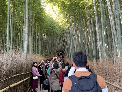 竹林の小径の込み具合