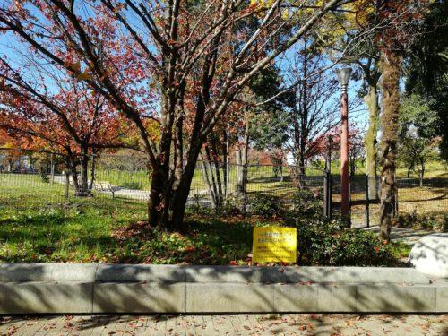 梅小路公園の紅葉2