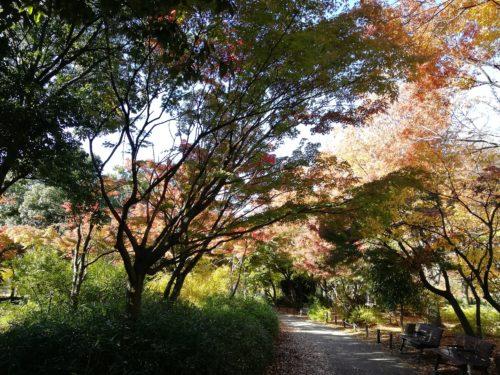 遊歩道の紅葉1