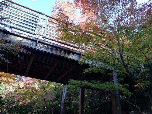 いのちの森の橋