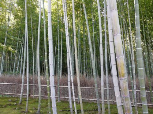 竹林の小径3