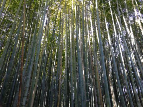 竹林の小径5