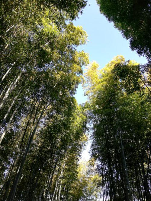 竹林の小径4