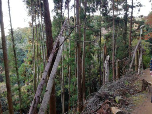 嵐山モンキーパーク山道1