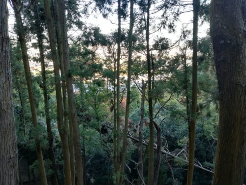 嵐山モンキーパーク山道2
