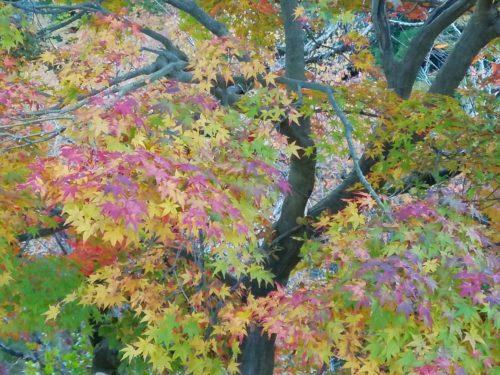 モンキーパークの下山途中の紅葉