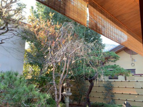 喜重郎中庭の様子2