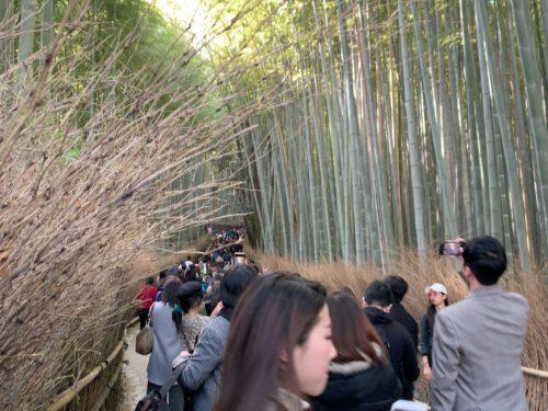 野宮神社を出てすぐの竹林
