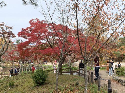 円山公園の紅葉3