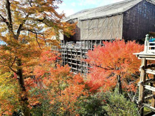 紅葉の清水の舞台1