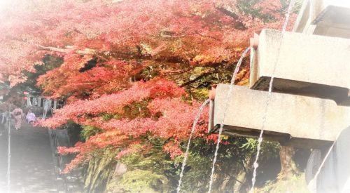 音羽の滝のイメージ1