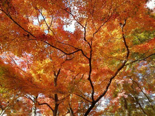 清水寺の紅葉4