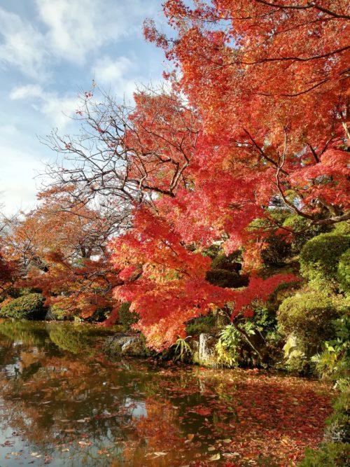 清水寺の放生池