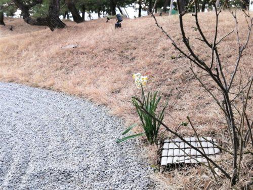 蓮の日本庭園4