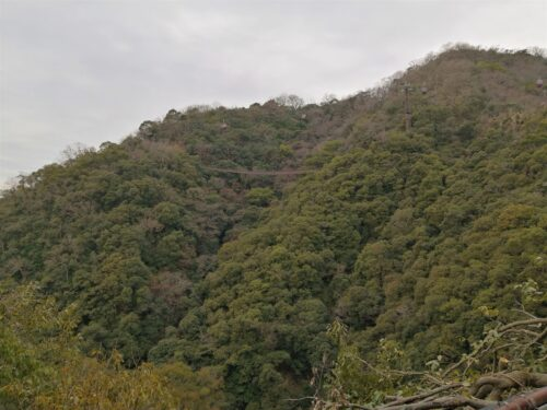 布引渓谷の森林
