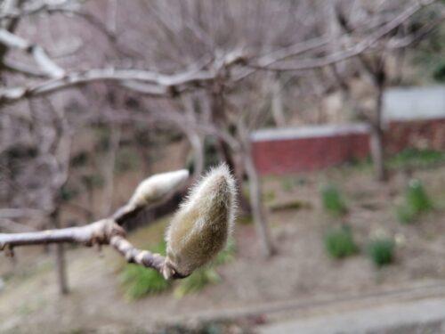 ハーブ園の梅