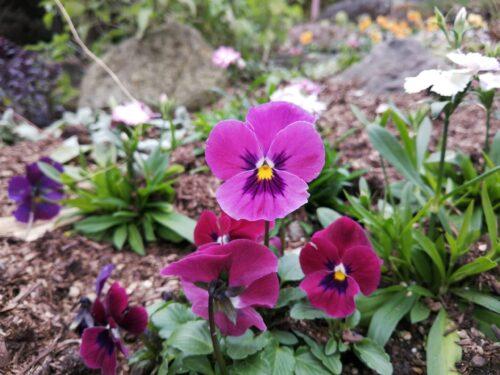 ハーブ園四季の庭4