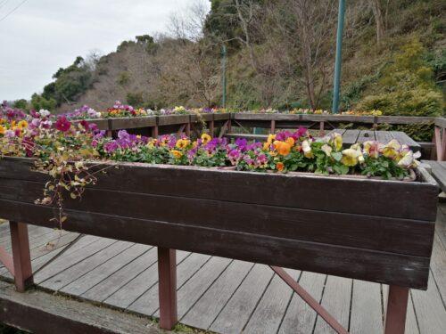 ハーブ園四季の庭5