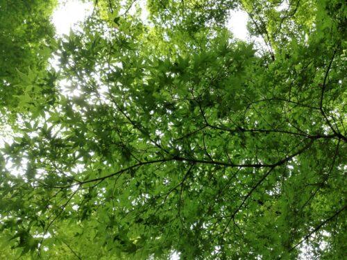 新宿御苑の緑1