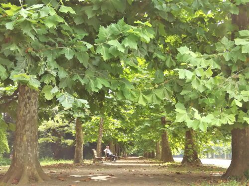 新宿御苑並木4