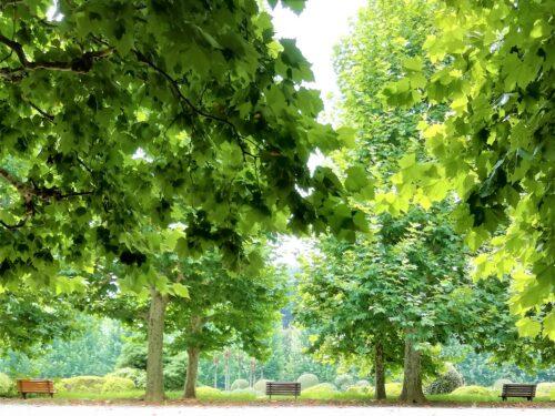 新宿御苑並木5