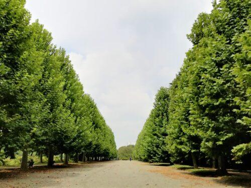 新宿御苑並木1