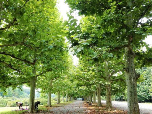 新宿御苑並木3