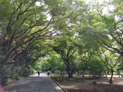 新宿門散策路1