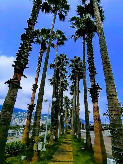 後楽園ホテルのヤシの木4