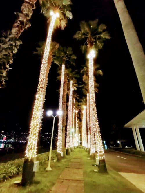 後楽園ホテルのヤシの木3