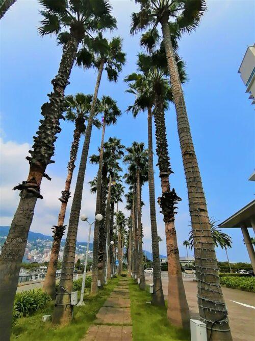 後楽園ホテルのヤシの木1